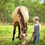 загадки про лошадей