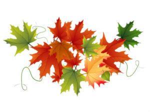 загадки про листья